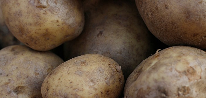 Nationwide survey to understand soil pests of potato
