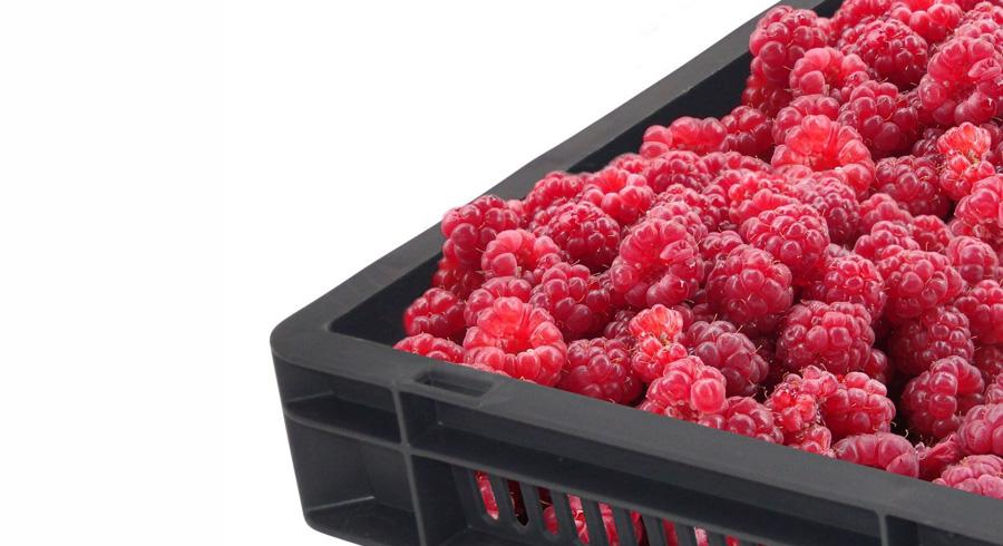 how to keep fruit fresh