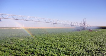 irrigation - R76 irrigating French beans