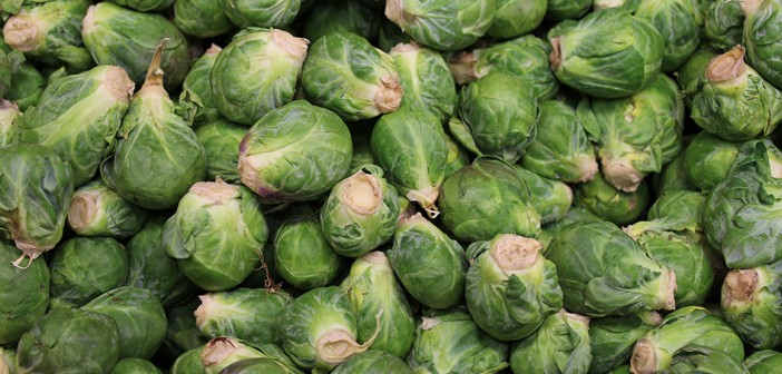 Warnings of sprout shortage