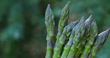 New Guelph asparagus hybrids sell out