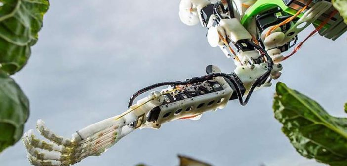 Scientists to build brassica robot