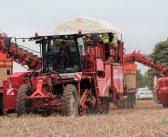 Aylsham potato grower to build new store