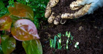 RHS gardens get ready to share their passion for plants for National Gardening Week