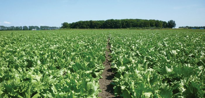 ASDA and NIAB assessment shows positive farmer soil health action