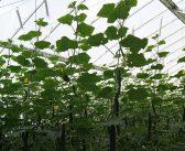 International teams enter autonomous greenhouse challenge