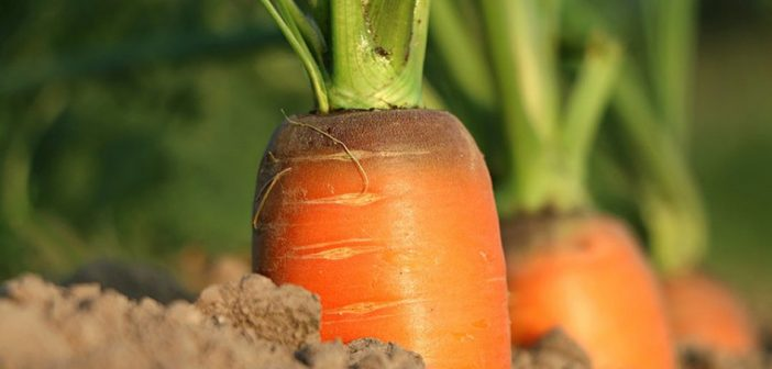 Climate change could threaten veg production
