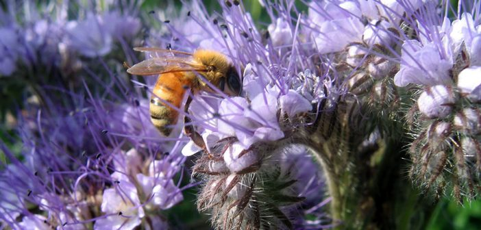 Co-op suppliers set up 'bee roads'