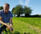 Growers face severe British carrot shortage