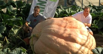 174 stone pumpkin is a world record holder