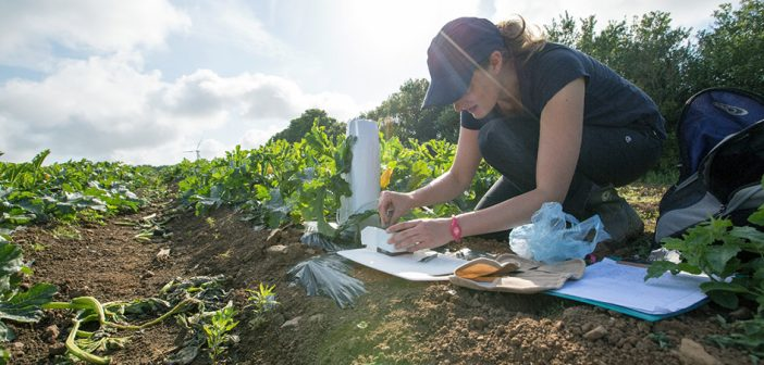 'Bee-lief' in wildflowers' value to courgette pollination