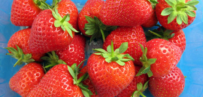 New varieties for East Malling Strawberry Breeding Club