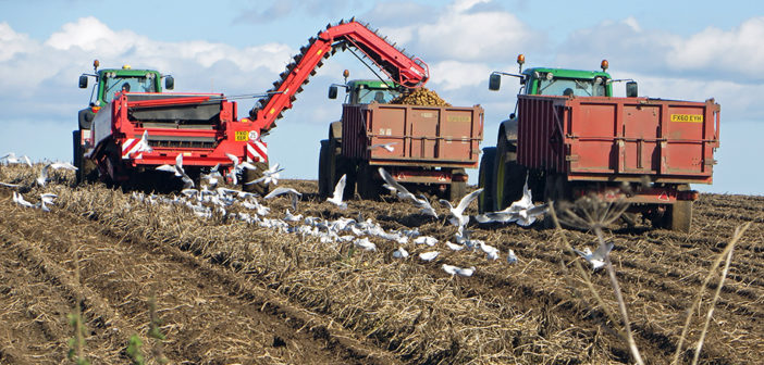 NEPG predicts higher potato harvest this year