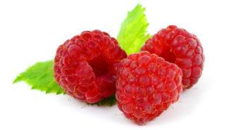 New raspberry varieties on display